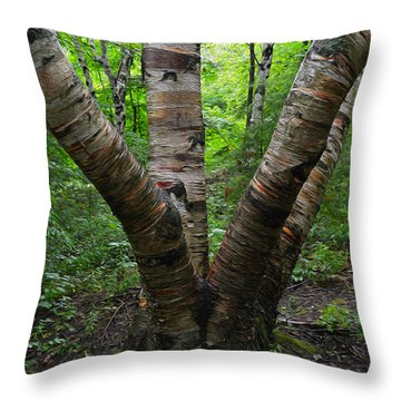 Throw Pillow featuring the photograph Birch Bark Tree Trunks by SimplyCMB