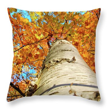 Birch Beauty Throw Pillow