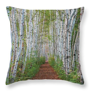 Birch Path Throw Pillow