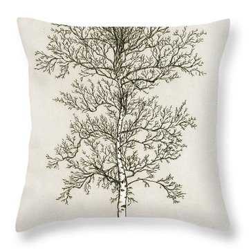 Birch Tree Throw Pillow by Charles Harden