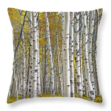 Birch Tree Grove With A Touch Of Yellow Color Throw Pillow