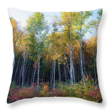 Birch Trees Turn To Gold Throw Pillow