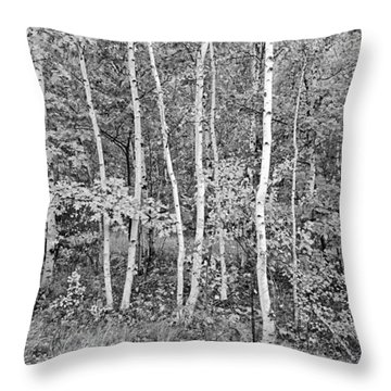 Throw Pillow featuring the photograph Birches Acadia 1995 by Peter J Sucy