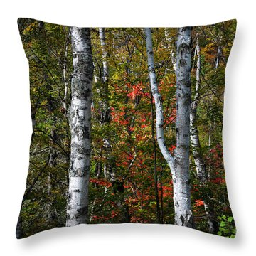 Throw Pillow featuring the photograph Birches by Elena Elisseeva