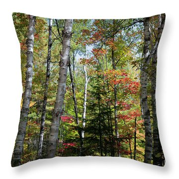 Throw Pillow featuring the photograph Birches In Fall Forest by Elena Elisseeva