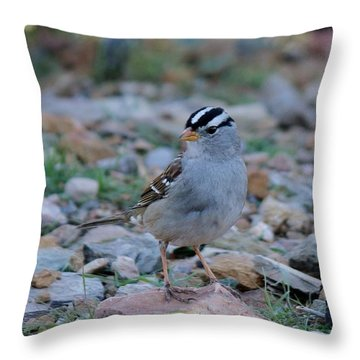 Throw Pillow featuring the photograph White-crowned Sparrow  by Christy Pooschke