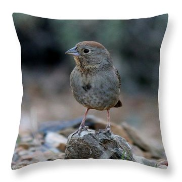 Throw Pillow featuring the photograph Bird 7 by Christy Pooschke