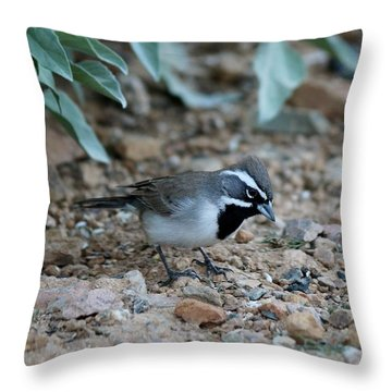 Throw Pillow featuring the photograph Bird  by Christy Pooschke