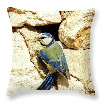 Bird Feeding Chick Throw Pillow