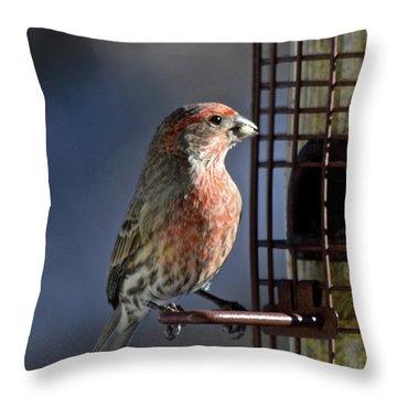 Bird Feeding In The Afternoon Sun Throw Pillow