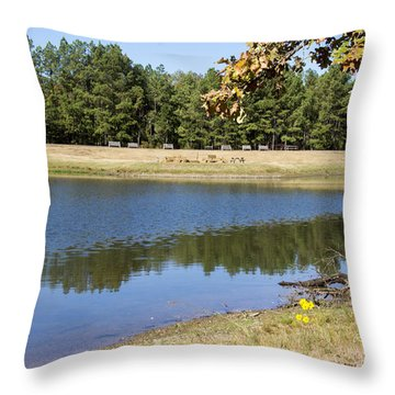 Bird House Lake Throw Pillow