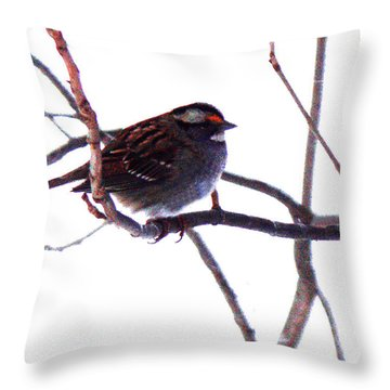 Throw Pillow featuring the photograph Bird In A Winter Bush. by Roger Bester