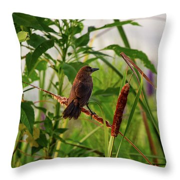 Bird In Cattails Throw Pillow