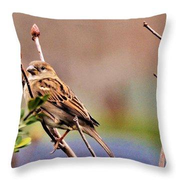 Bird In The Cold Throw Pillow