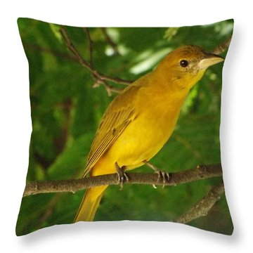 Bird Of Colombia 2 Throw Pillow