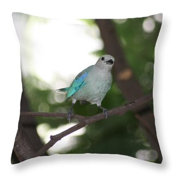 Bird Of Colombia 4 Throw Pillow