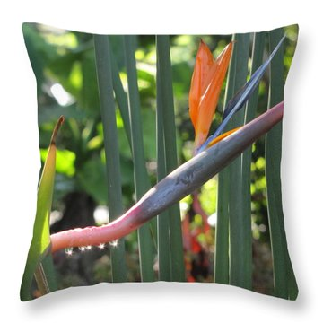 Bird Of Paradise Dripping Throw Pillow