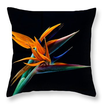 Bird Of Paradise Throw Pillow by James Roemmling