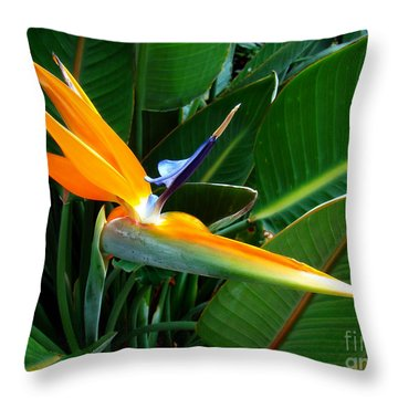 Throw Pillow featuring the photograph Bird Of Paradise by Sue Melvin