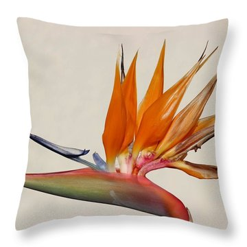 Bird Of Paradise With White Background Throw Pillow