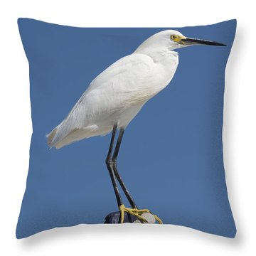 Bird On A Buoy Throw Pillow by Loriannah Hespe
