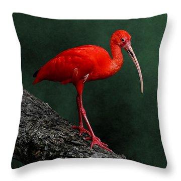 Bird On A Catwalk Throw Pillow