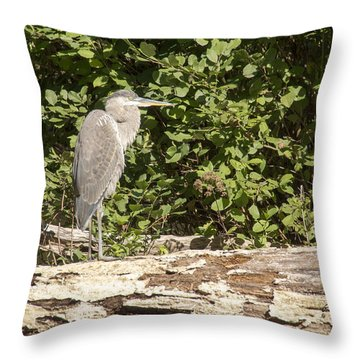 Bird On A Log Throw Pillow