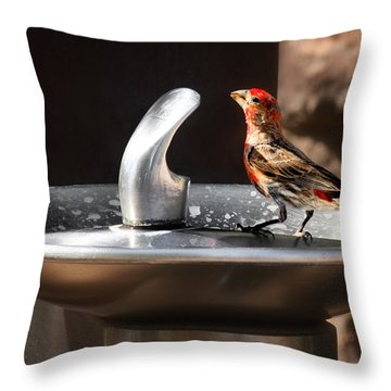 Bird Spa Throw Pillow by Christine Till