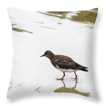 Throw Pillow featuring the photograph Bird Walking On Beach by Mariola Bitner