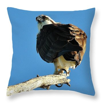 Birds 10 17 Throw Pillow