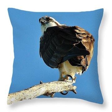 Birds 10 17 Throw Pillow