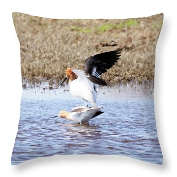 Birds Do It Throw Pillow