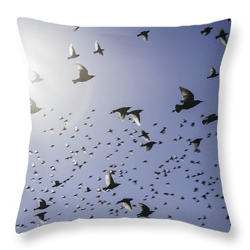 Birds Throw Pillow by Lynn Geoffroy