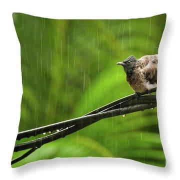 Birds Of Sri Lanka  Pycnonotus Cafer Throw Pillow by Venura Herath