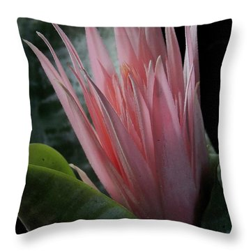 Birth Of A Bromeliad Throw Pillow