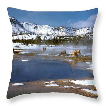 Biscuit Basin Elk Herd Throw Pillow