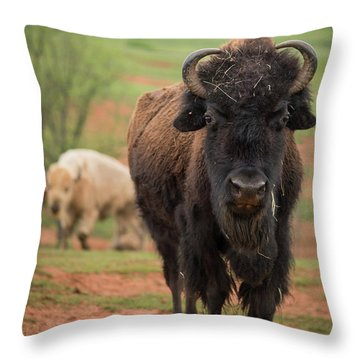 Throw Pillow featuring the photograph Bison 6 by Joye Ardyn Durham