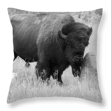 Bison And Buffalo Throw Pillow