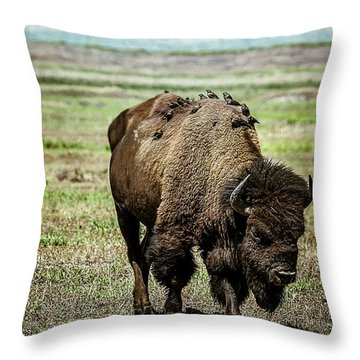 Throw Pillow featuring the photograph Bison Bird Bus by Mary Hone