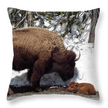Bison Calf After Birth Throw Pillow