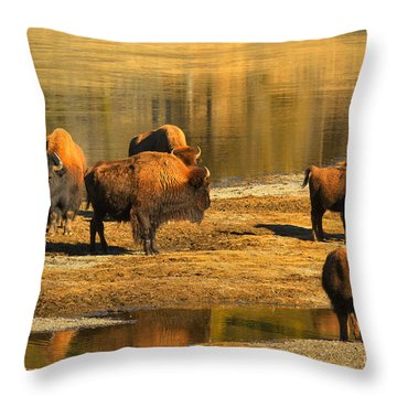 Throw Pillow featuring the photograph Bison Family Crossing by Adam Jewell
