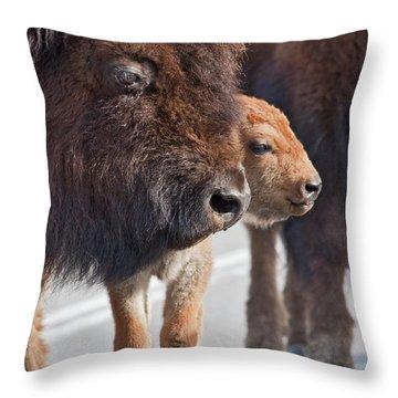 Bison Family Throw Pillow
