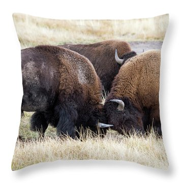Bison Fight Throw Pillow