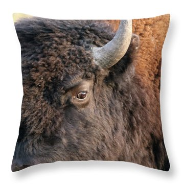 Bison Head Study Throw Pillow
