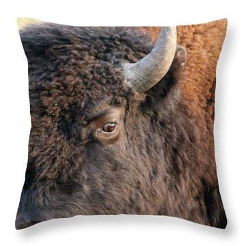 Bison Head Study Throw Pillow
