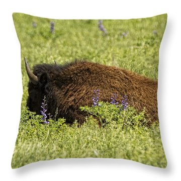 Bison In Bluebonnests Throw Pillow