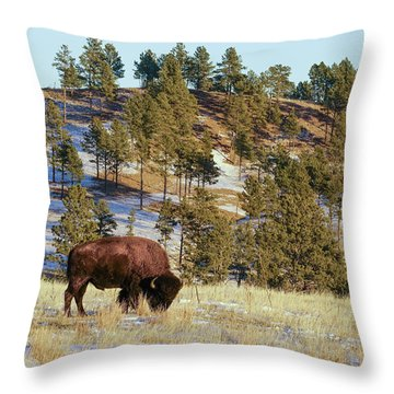 Bison In Custer State Park Throw Pillow