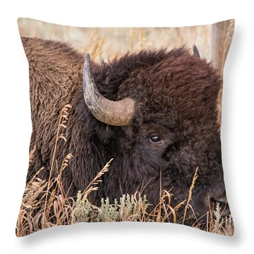 Throw Pillow featuring the photograph Bison In The Grass by Mary Hone