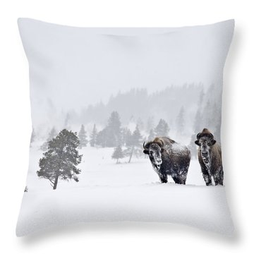 Bison In The Snow Throw Pillow by Gary Lengyel