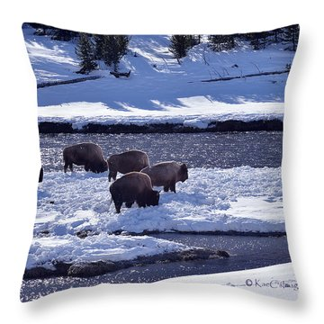 Bison On River Strand Landscape Throw Pillow